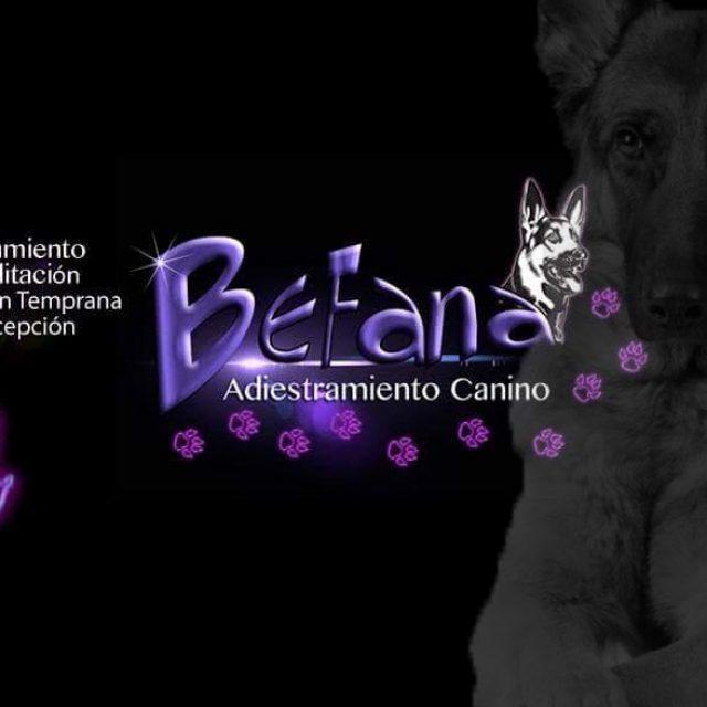 Befana – Adiestramiento Canino