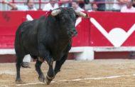 Procederá FGE para quien maltrate la integridad de toros